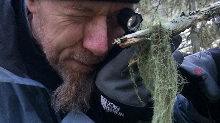 En man med lite gråsprängt hakskägg tittar med lupp på en grågrön skägglav