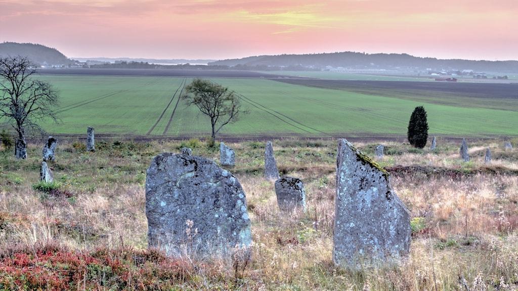 Resta stenar på gravfält. I bakgrunden vårgröna åkrar och en rosa himmel.