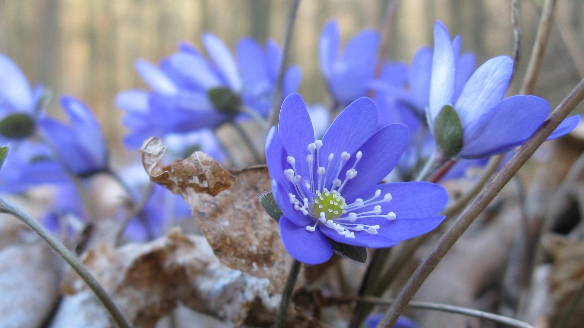 Koll på våren