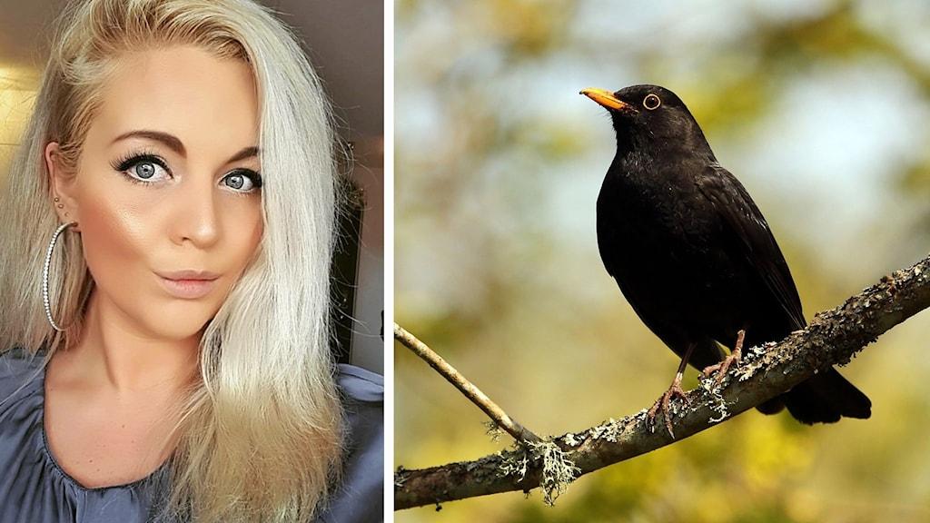 tvådelad bild på ung kvinna och en koltrast