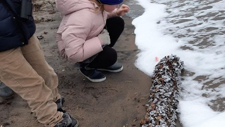 Ett barn sitter hukat vid strandkanten framför en stock av konstiga kräftdjur, ett barn står