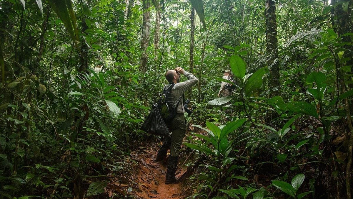 Amazonas unika artrikedom