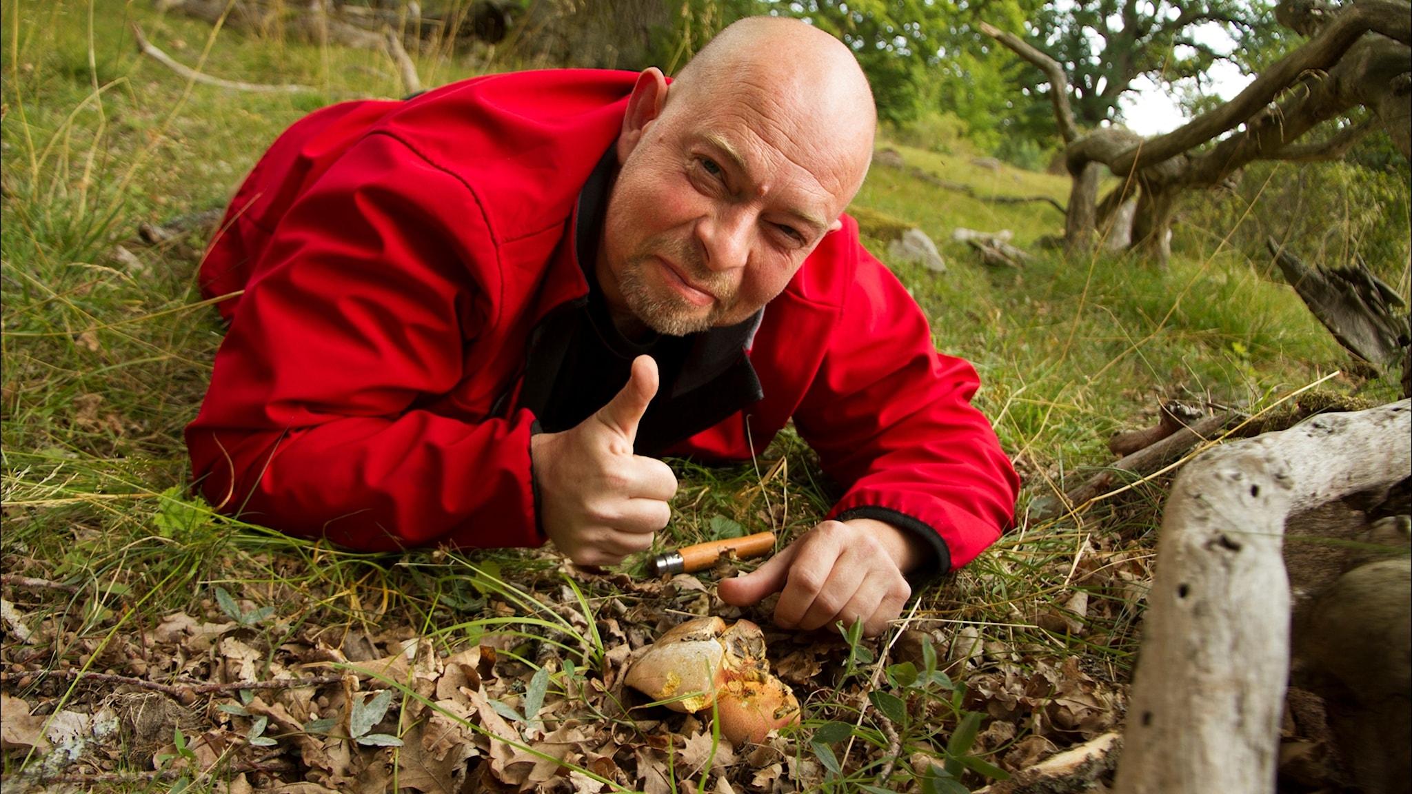 Svampgalen #1: På svamparnas planet