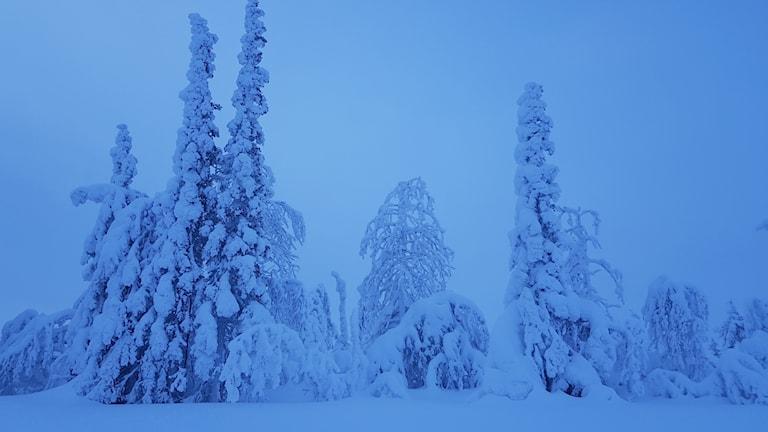 Snölandskap i Tjautjas norr om Gällivare