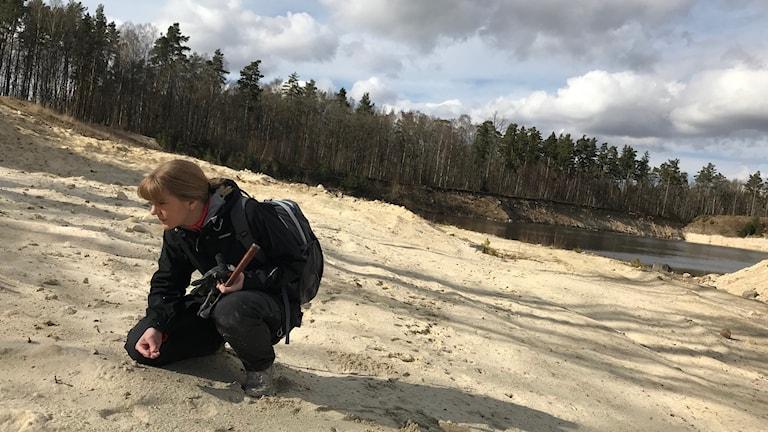 I sanden i Ullstorp finns mängder av fossil bevarade. Viktiga ledtrådar till att få en bild av hur ekosystemet såg ut här för 80 miljoner år sedan, något som Elisabeth Einarsson ägnat sin doktorsavhandling åt.