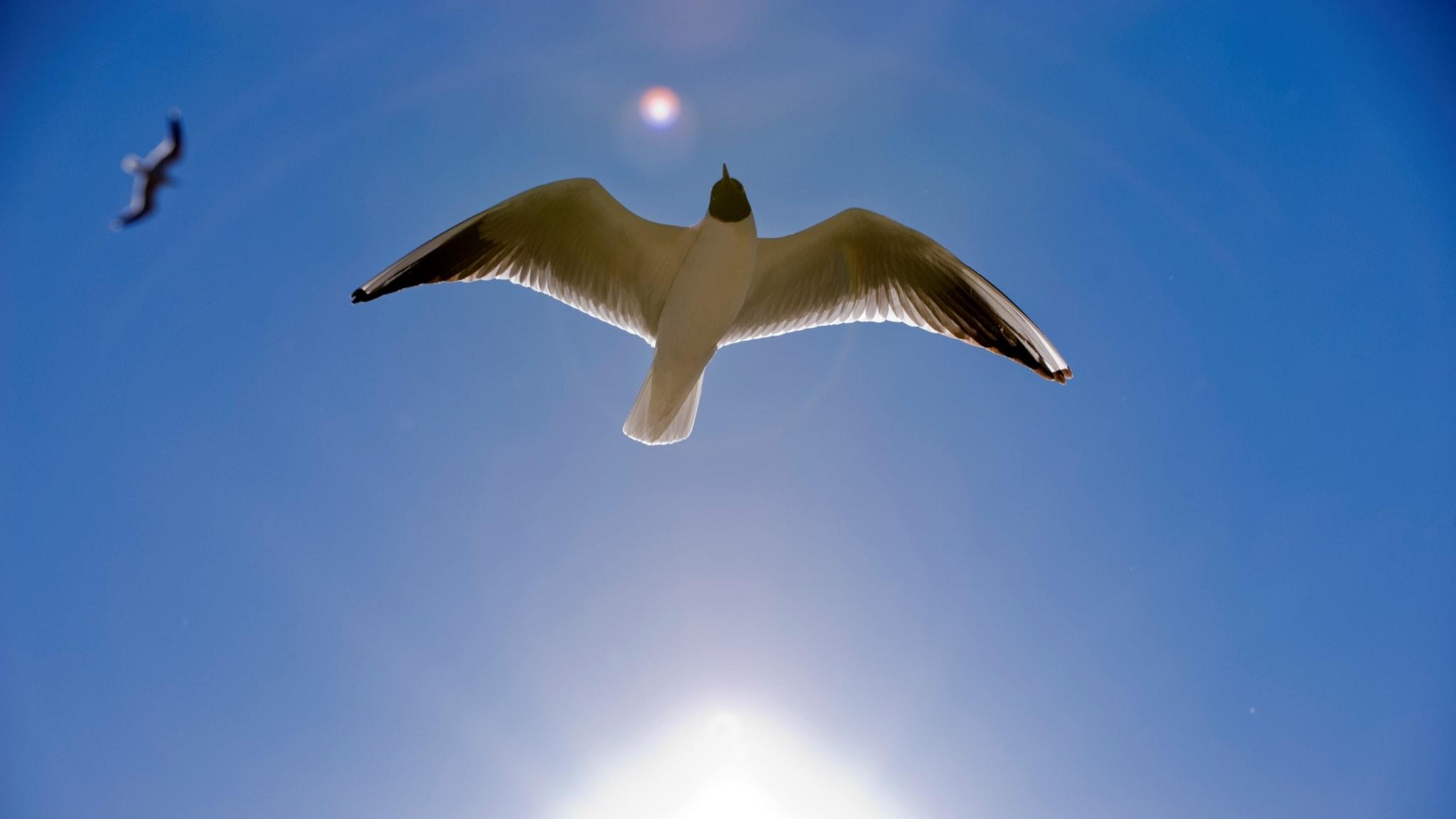 Två fåglar och blå himmel