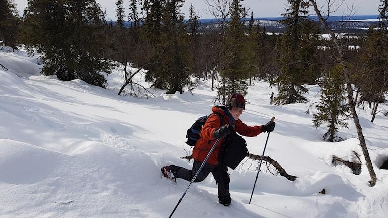 Fältreporter Thomas Öberg på väg utför Sörstubba i Muddus.