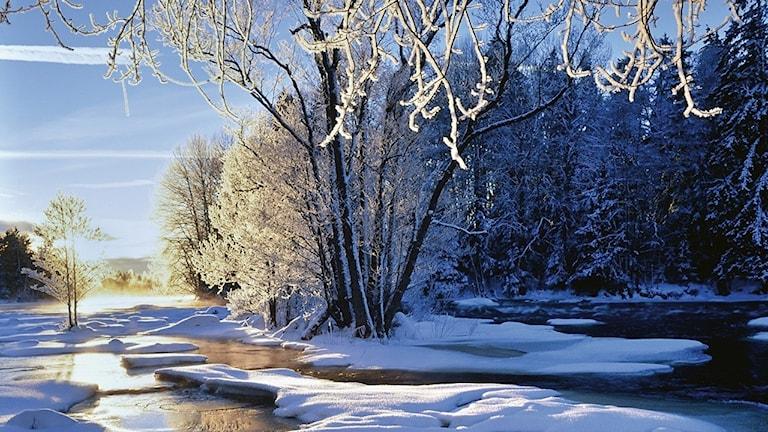 Vinter vid Sevedskvarn Alf Linderheim