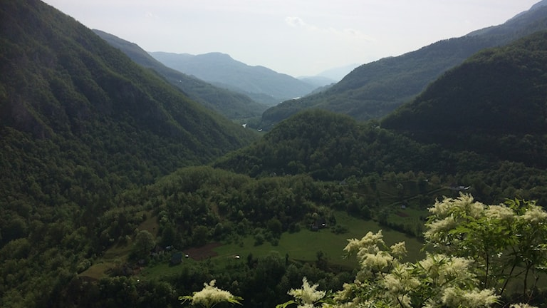 Tara River rinner mellan bergen.