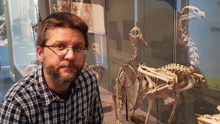 En man framför ett skelett av havsörn på museum.