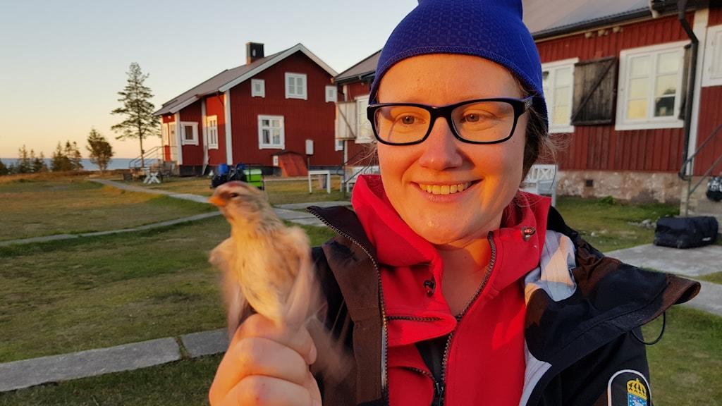 Ringmärkaren Anna Hallmén visar en märkt snösiska.