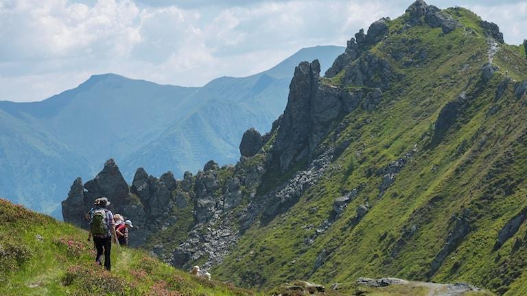 Schlossalm. Alperna är en ung bergskedja, bara 50-80 miljoner år!