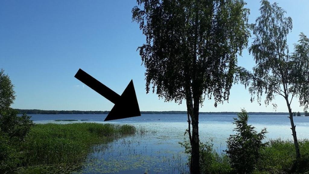 En vy över en sjö där man på flera hundra meters håll ser två små prickar, huvudena på en simmande älgko och en kalv.
