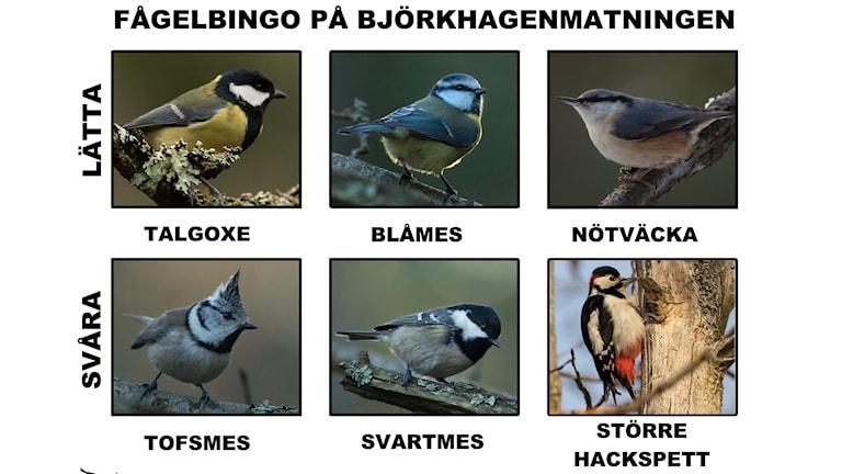 """En """"bricka"""" med bilder på sex fågelarter"""