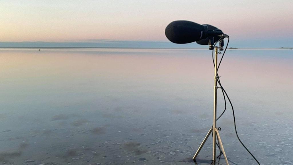 Ett par stora mikrofoner monterade på ett stativ står på grunt vatten och pekar ut mot en stilla spegelblank havsstrand i blekt morgonljus.