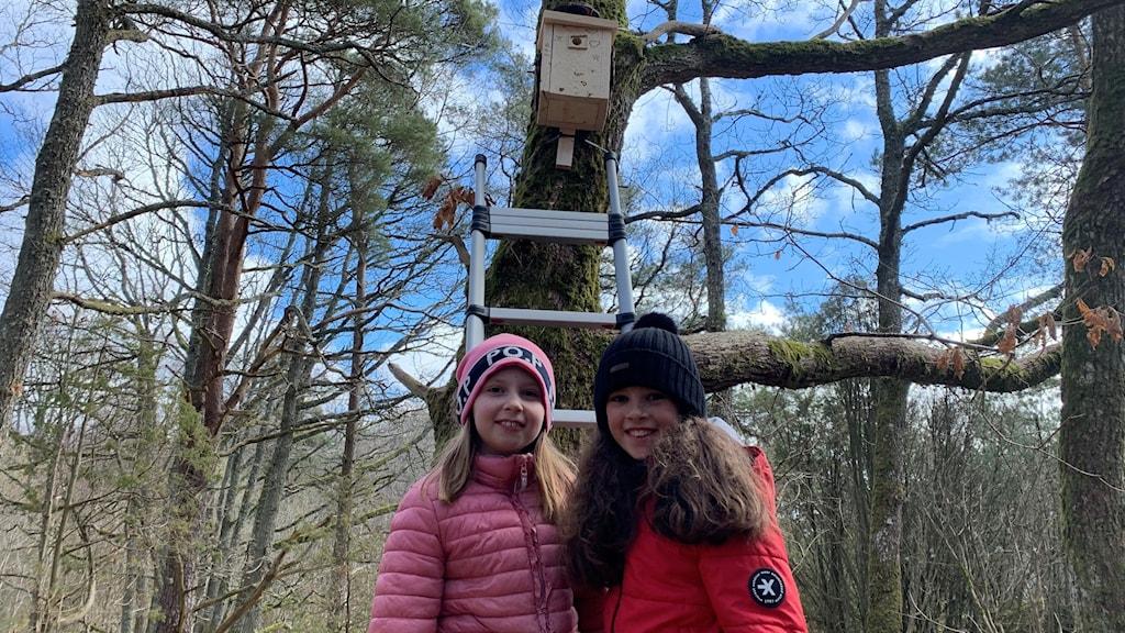 Två 9-åriga flickor, den ena med rosa jacka, den andra med röd, står framför ett träd och i den hänger en fågelholk.