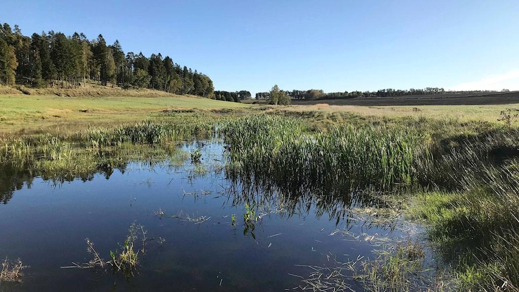 En våtmark  med öppet vatten och växtlighet. Solsken.