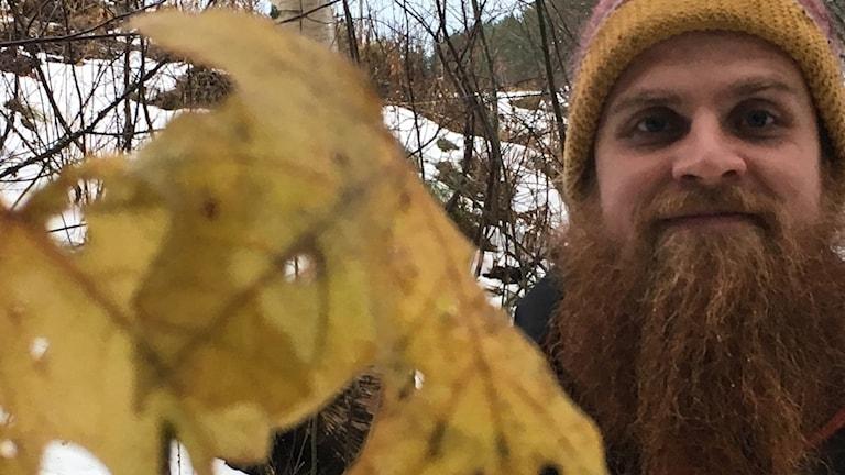 Lars Dahlberg vid jättelönnen som planterades ut i år i Arboretum Norr.