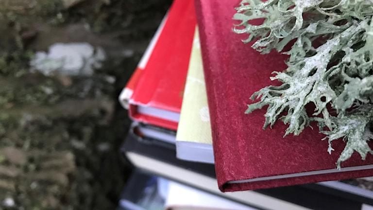 En bokhög och en slånlav