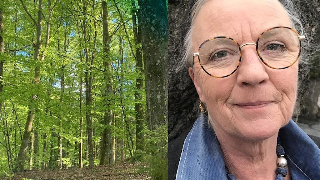 En tvådelad bild med ljusgrön bokskog och en kvinna till höger
