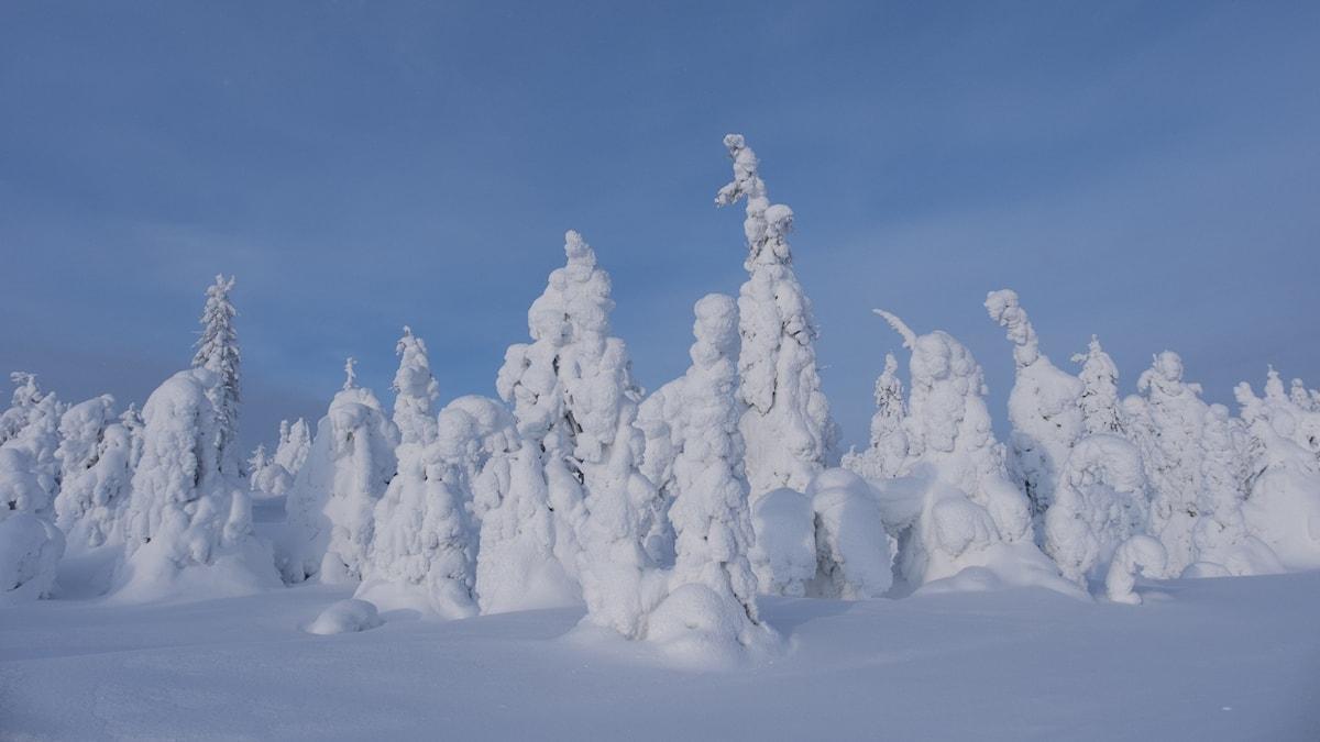 Snö på träd