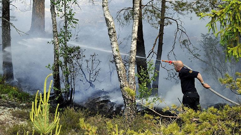 Brandman som bekämpar brand i skog. Foto: Pontus Lundahl /Scanpix.