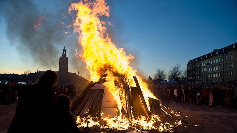 Majbrasa på Riddarholmen i Stockholm. Foto Jonas Ekströmer / SCANPIX