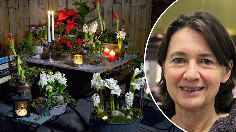 Ann Fredlund är chefredaktör för Allt om trädgård och tycker att det är för mycket slit och släng med julväxter.