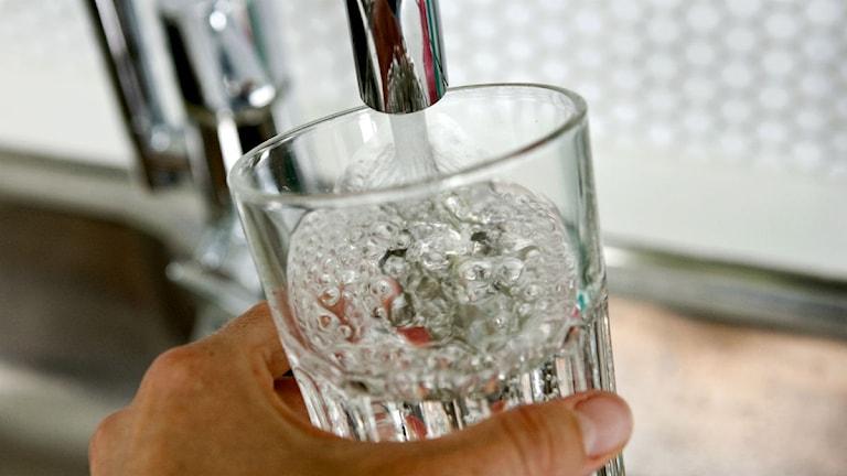 Ett glas fylls med kranvatten. Foto: Christine Olsson/Scanpix.