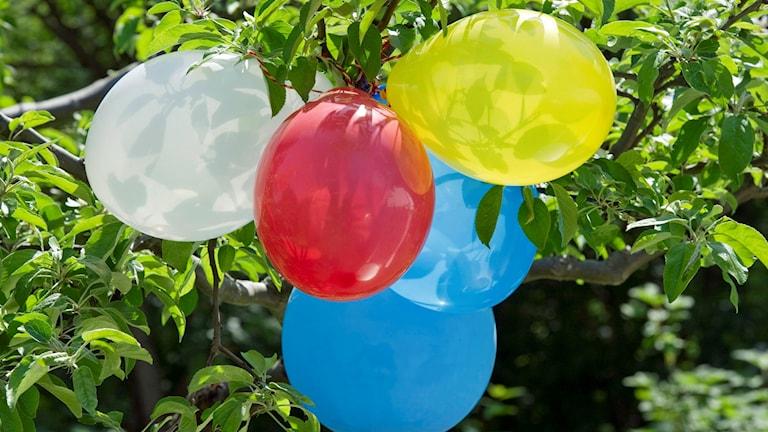 Foto av färgglada ballonger på ett kalas