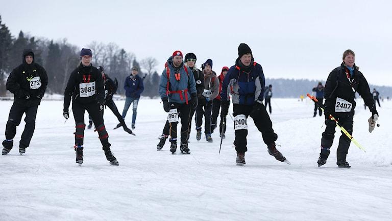 3 000 deltagare i Vikingarännet åkte de åtta milen från Skarholmen i Uppsala till Hässelby i Stockholm förra året