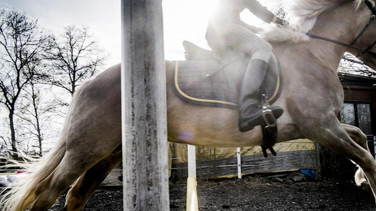 Häst och ryttare. Foto: Magnus Hjalmarson Neideman/TT