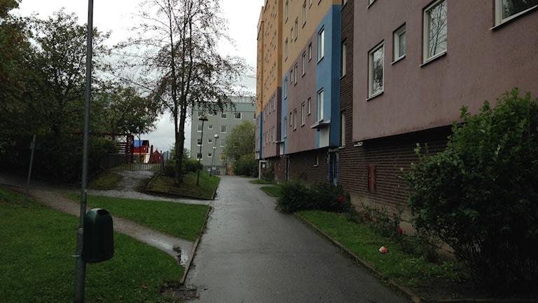 Bostäder på Albyberget. Foto: Max Pröckl/ Sveriges Radio