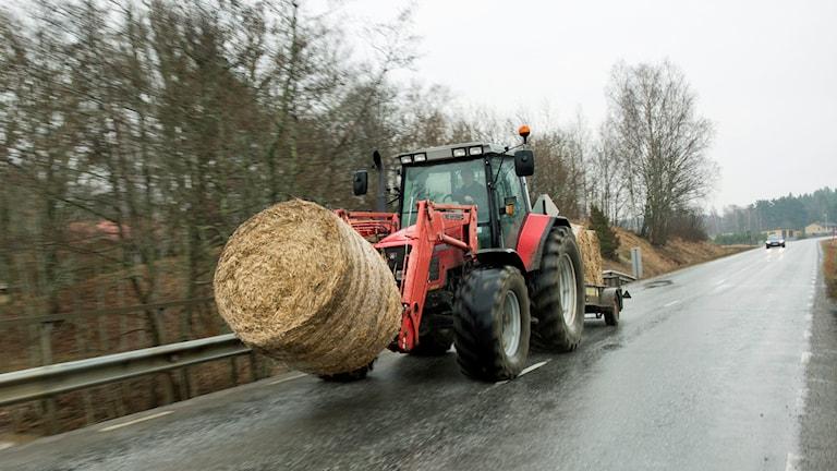 En traktor transporterar ensilage på en väg. Foto: Fredrik Sandberg / TT.