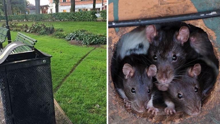 Råttornas stig vid Karlaplan