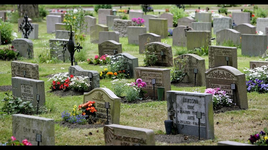 Gravar, kyrkogård, skogskyrkogården.  FOTO: CLAUDIO BRESCIANI / TT