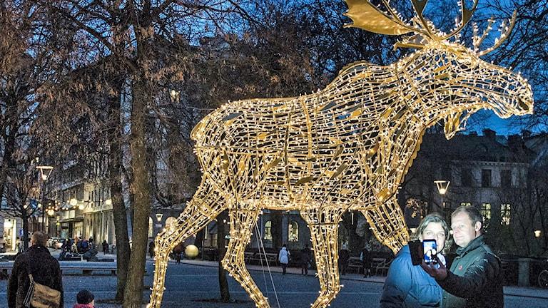 Julälgar på Nybroplan