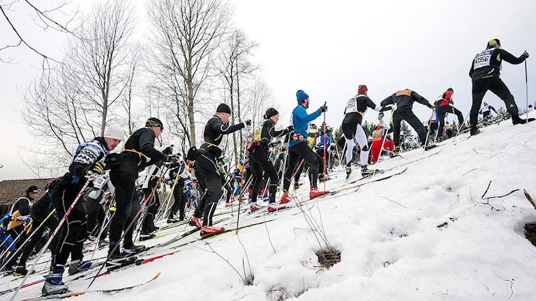 Vasaloppsåkare i Berga By 2015. Foto Ulf Palm/TT