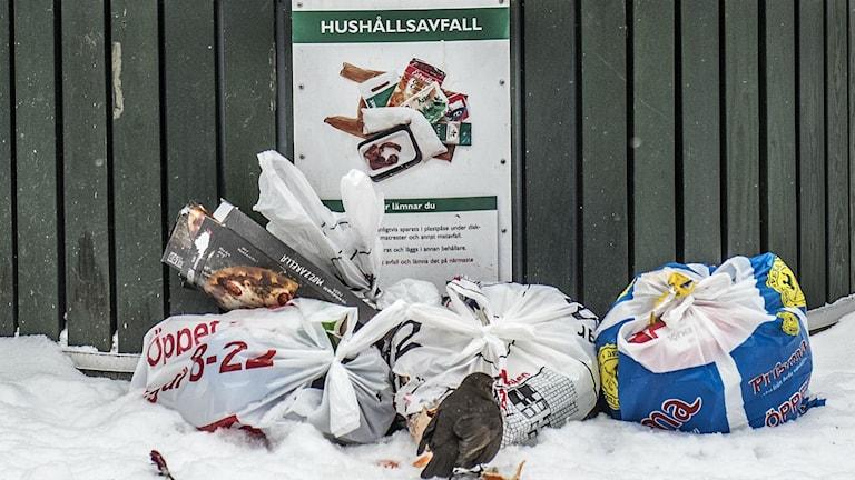 Stockholms nya entreprenad ligger efter med att hämta sopor i Stocklom.