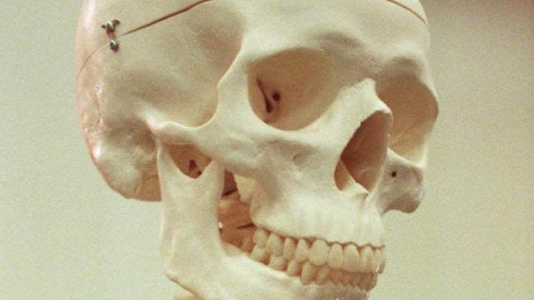I Björknäs hittade förskolebarn i går delar av ett skelett (arkivbild).