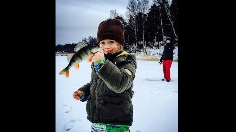 Bild 1. Love isfiskar på Ingarö. Fotograf: Anton.Svedberg