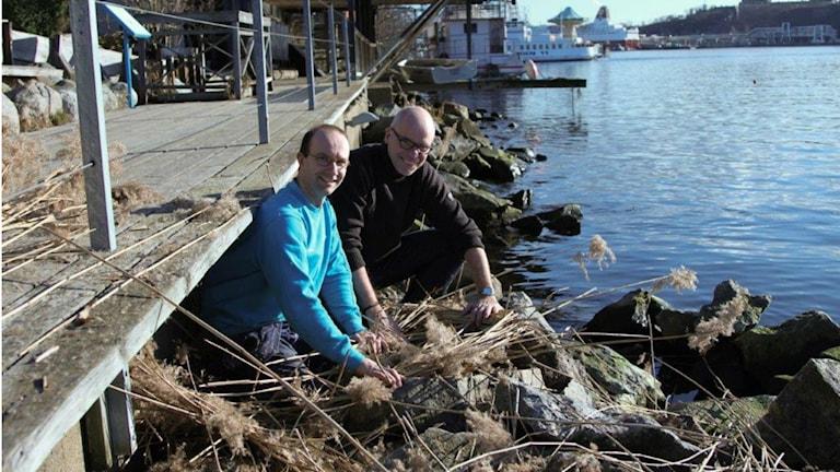 Robban Tranefalk och P4 Stockholms Ulf Bungerfeldt mitt i det blivande svan-boet.