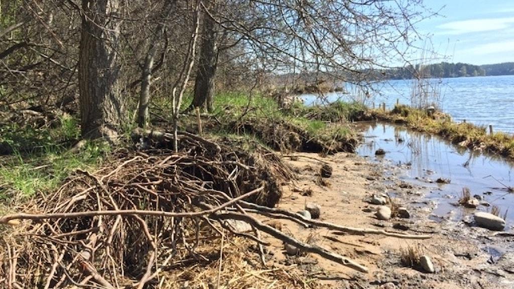 en strand i stockholms skärgård där forskare placerad ut biologiskt nedbrytbart erosionsskydd