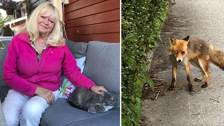 Till vänster syns en kvinna med blont hår och rosa tröja, till höger syns en räv på en väg.