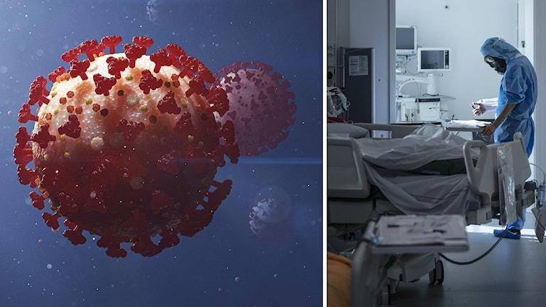 Till vänster en närbild på ett virus, till höger vårdpersonal i skyddsutrustning vid en patientsäng.