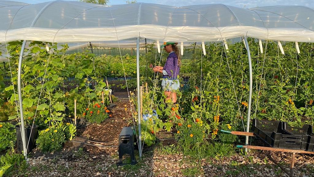 Mira Gartz är en av volontärerna som hjälper till att närodla grönsaker i Hässelby.