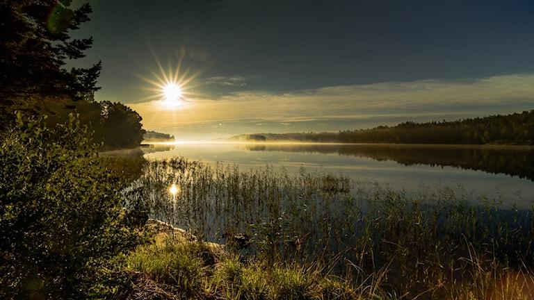 Östersjöbild av Gunnel Bratt