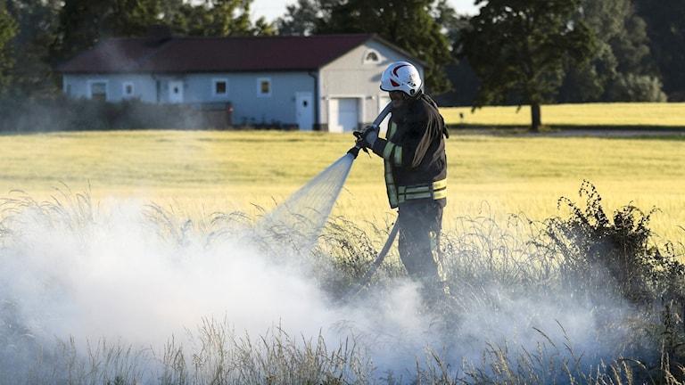 Firefighter extinguishing grass fire.