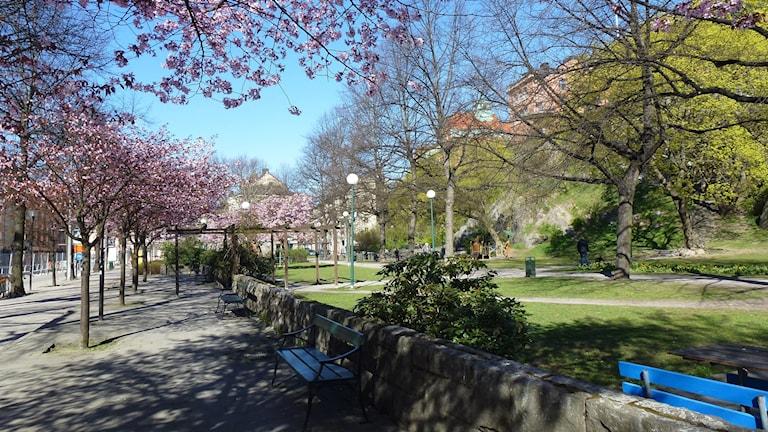 Stigbergsparken på Söder