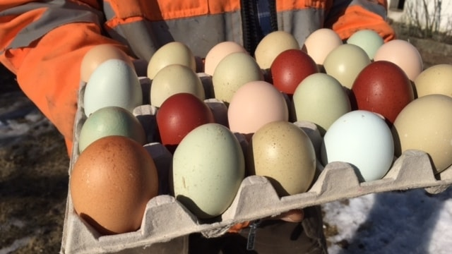 Färglada ägg
